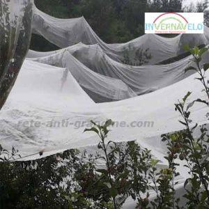 il tessuto frost sugli alberi li proteggerà dalla grandine