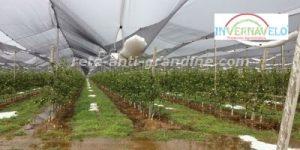 campo coltivato protetto con rete di grandine