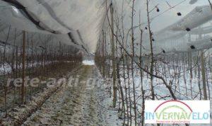 serra protetta con rete di grandine