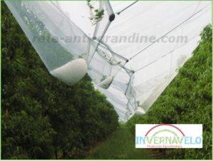 anti grandine rete proteggendo alberi contro grandine attacco
